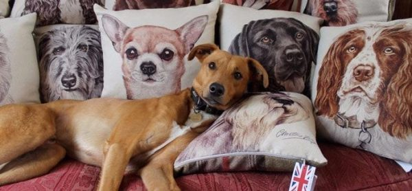 Waggydogz Cushion Collection by Christine Varley featuring Jack Russell Cushion